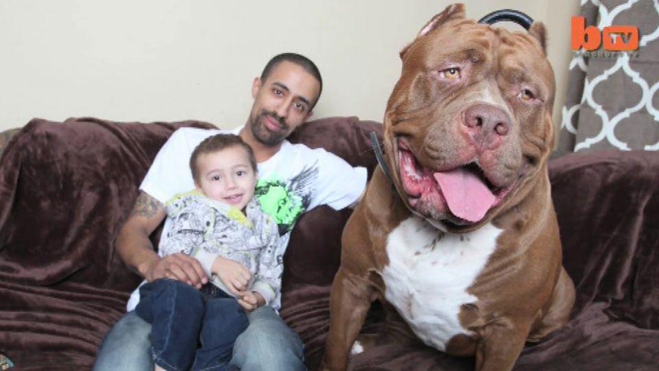 Billedresultat for hundehvalp med kvindelig ejer foto