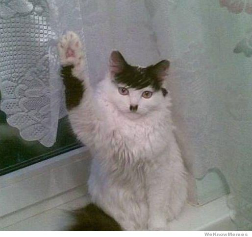 hitler-cat.jpg.291f69b120e428e4aa35b15ac