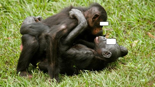 bonobo 6.jpg