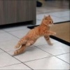 Breakdancingcat
